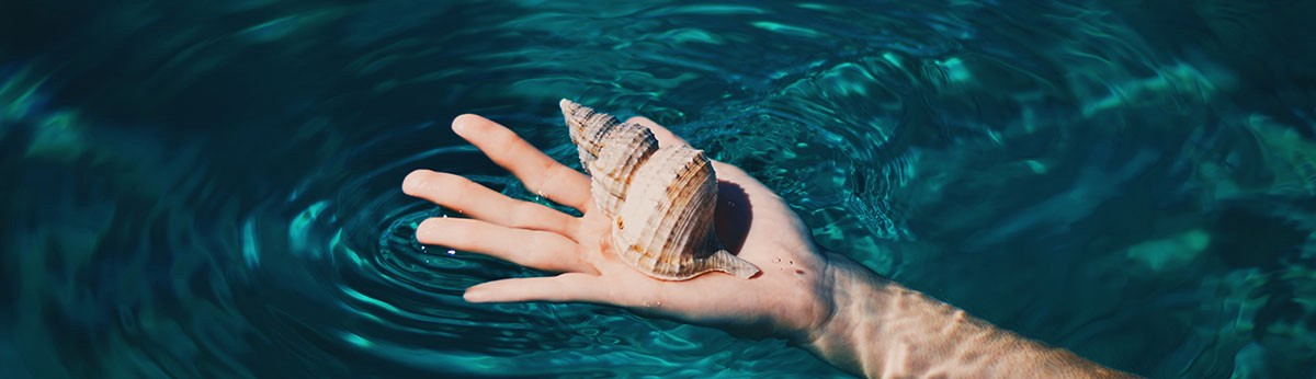 open hand with a shell in it