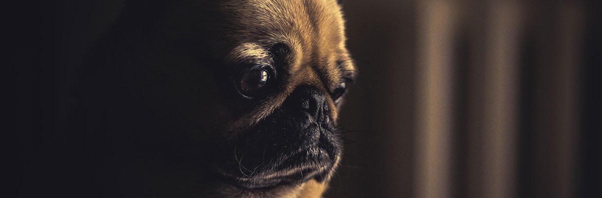 sad doggie wondering about erectile dysfunction